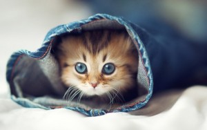 Cute-cat-kitten-jeans-the-bed-hd-freehdwallcom-free_large
